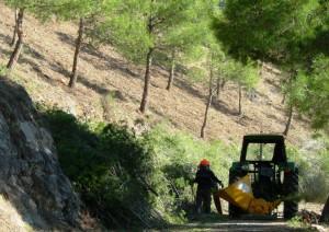 consultor servicios forestales