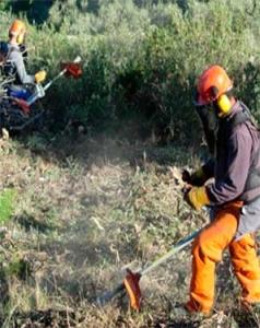servicios forestales andalucia